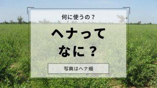 ヘナってなに?何に使うの?ヘナ畑
