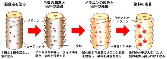 ヘアカラー染色の仕組み