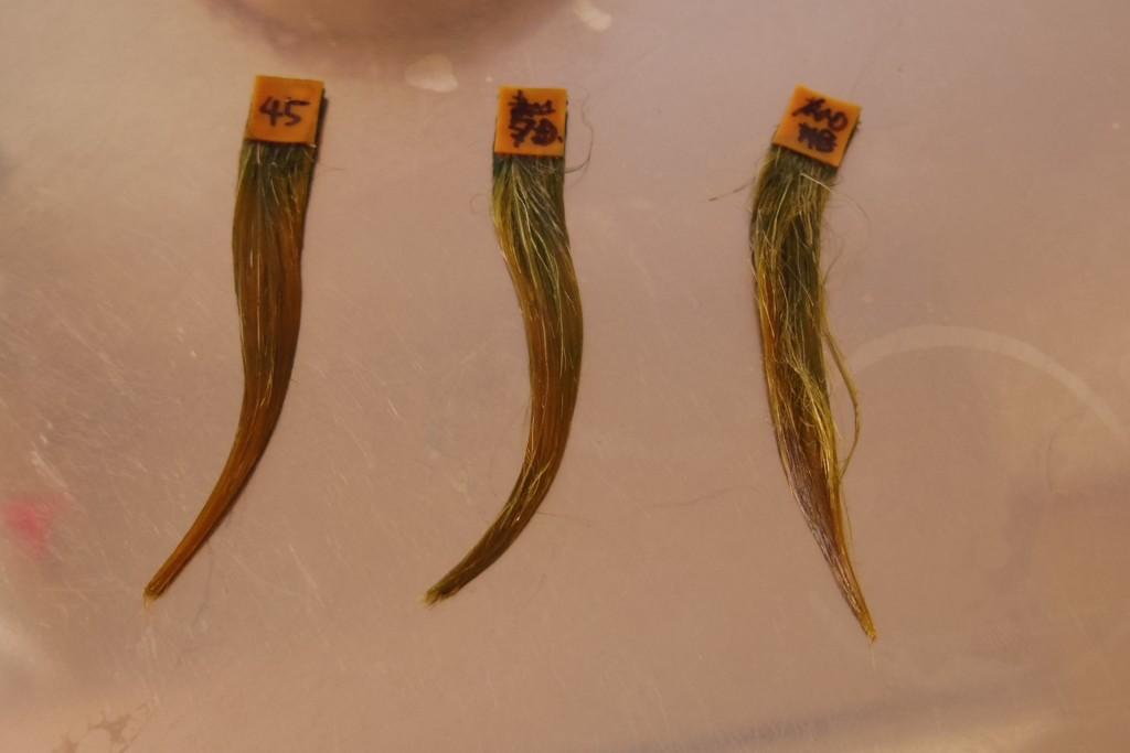 マホガニー染め45分後の3つの毛束